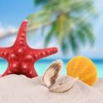 Shells and starfish on sand beach — Stock Photo