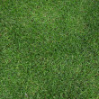 Green grass texture — Stock Photo #10444044