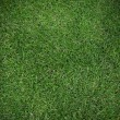 Green grass texture — Stock Photo #10444075
