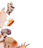 Sea shells over white background — Stock Photo