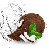 Coco com respingos de água sobre branco — Foto Stock