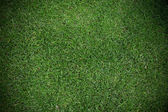 Green grass texture — Stock Photo