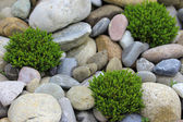 Pebble stones texture with green flowers — 图库照片
