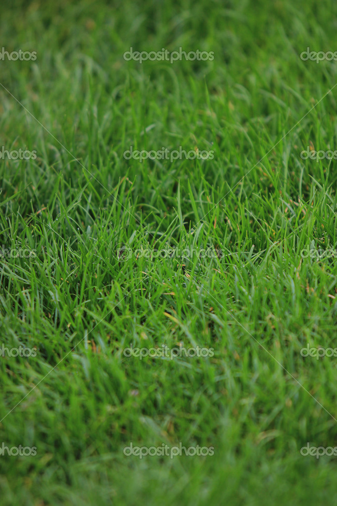 Green grass texture   Stock Photo #10444116