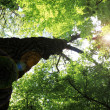 Walk in the woods, below a huge leafy tree - Photo