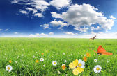 Beautiful spring background — Stock Photo