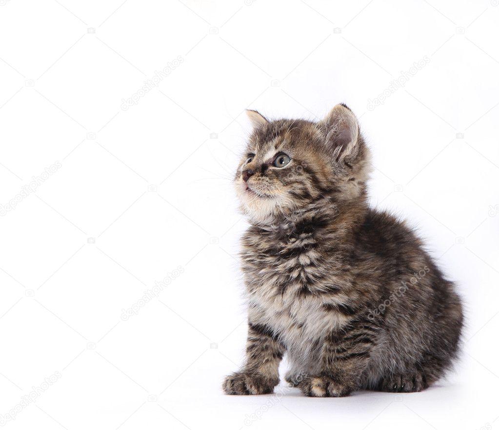 可爱的小猫 — 图库照片08kesu01#8372590