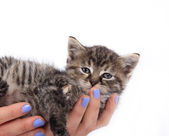 Kitten on woman hand — Stock Photo