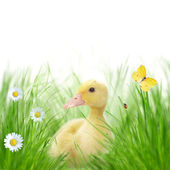 Beautiful spring background — Stock Photo