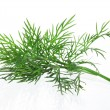 Fresh dill over white background — Stock Photo #9115155