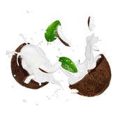 Coconut with milk splash over white — Stock Photo