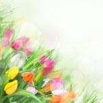 Beautiful spring tulips — Stock Photo #9972228