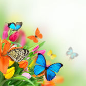 Spring flowers with exotic butterflies — Stock Photo