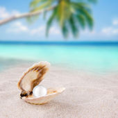 An open shell with a pearl. — Stock Photo