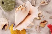 Sea shells — Stock Photo