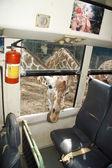 Giraffe Safari — Stock fotografie