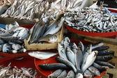 Taze balık — Stok fotoğraf