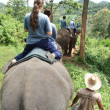 Elephant riding — Stock Photo #9029205