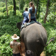 Elephant riding — Stock Photo