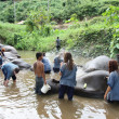 Stock Photo: Bathing elephants