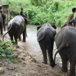Stock Photo: Elephants at the river