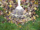 Raking fallen autumn leaves — Stock Photo