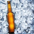 Foto Stock: Bottle of beer is in ice