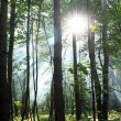 Stock Photo: Sunny forest.