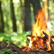 Stock Photo: Bonfire in the forest.