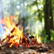 Bonfire in the forest. - Foto Stock
