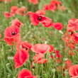 Field of wild poppy flowers. — Stock fotografie #10634807