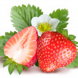 Strawberries with leaves and flower. Isolated on a white backgro — Stock Photo
