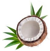Coconut — Stock Photo
