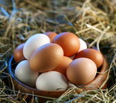 Chicken eggs in the straw in the morning light. — Stock Photo