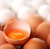 Tavuk yumurtası. — Stok fotoğraf