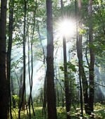 Sunny forest. — Stock Photo