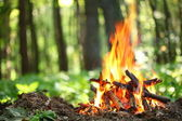 Bonfire in the forest. — Stock Photo