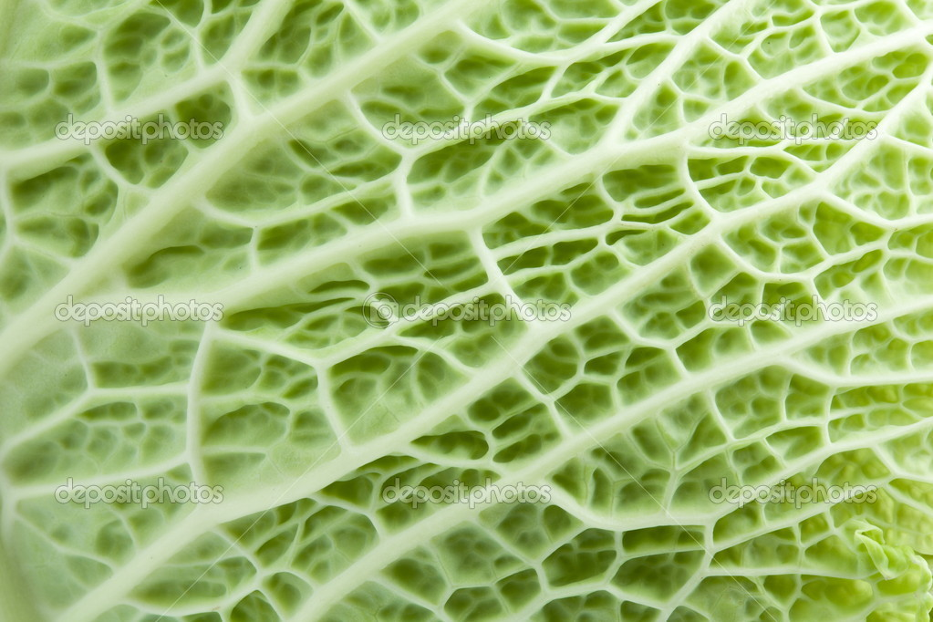 Image texture cabbage leaf — Stock Photo #10634202