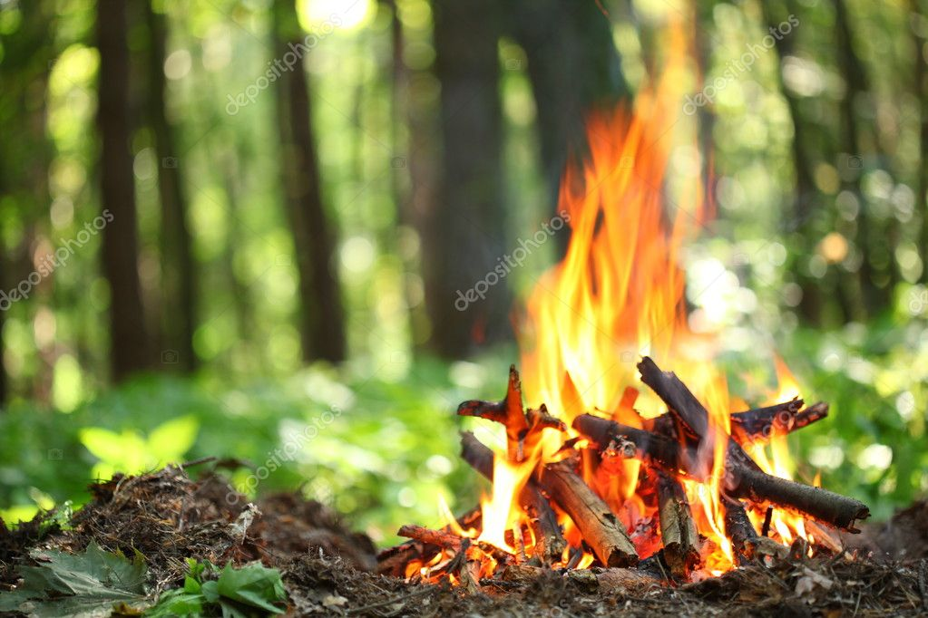 Фотообои Bonfire in the forest.