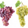 Grapes on a white background. — Stock Photo