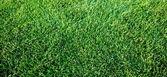 свежий весенний geen трава — Стоковое фото