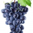 Grapes — Stock Photo #8163712
