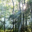 Sunny forest. - Stockfoto