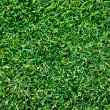 Fresh spring geen grass - Stock Photo