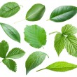 Garden leaves - Stock Photo