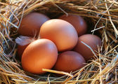 Eggs in the straw — Stockfoto