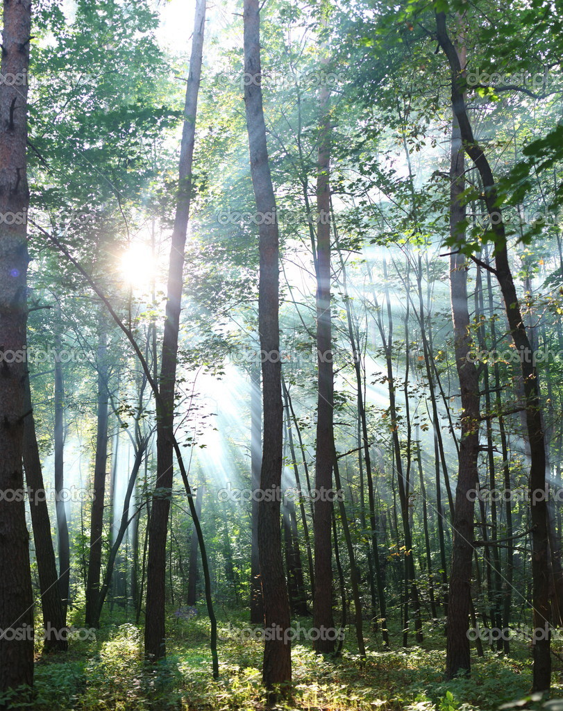 Sun's rays shining through the trees in the forest. — Stock Photo #9599779