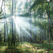 Foto Stock: Sun's rays shining through trees