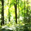 Nature blur background - Zdjęcie stockowe