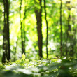 Nature blur background - 图库照片